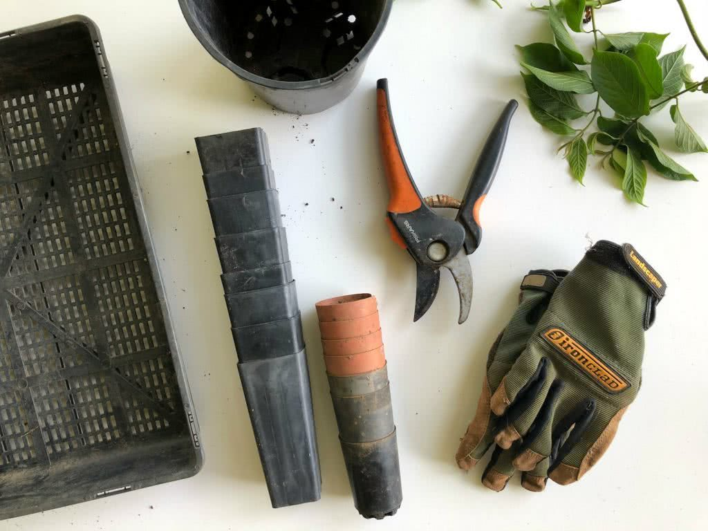 Flat lay photograph of gardening tools including plastic trays, gloves, secateurs and plastic tubs