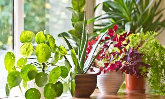 Must-have indoor plants to add this season